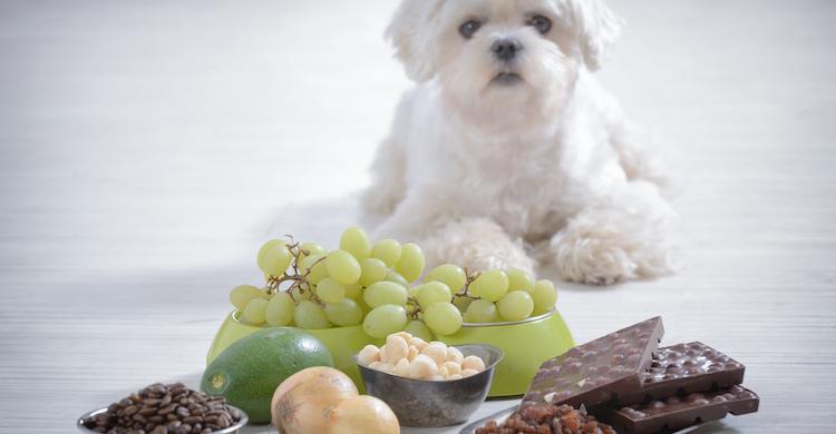 Es importante conocer cuáles son los alimentos prohibidos para tu mascota (iStock).