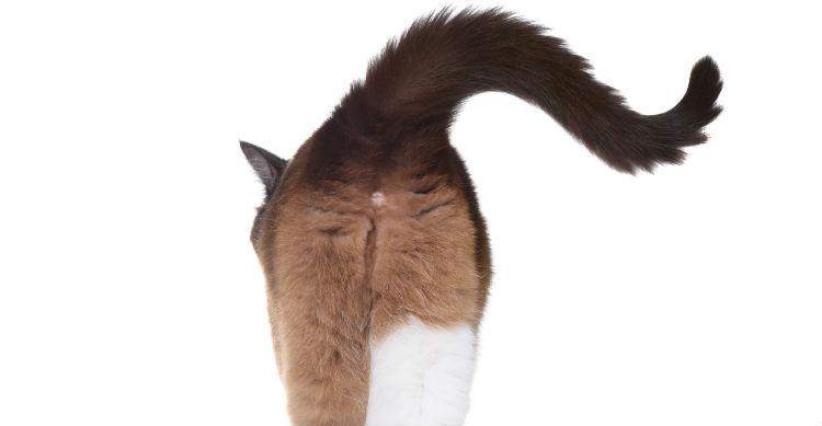 Ante cualquier duda, consulta con el veterinario para evitar males mayores en tu gato (Foto: iStock)