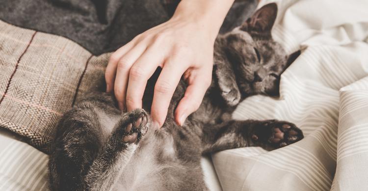 Los masajes suelen relajar a los gatos (iStock).