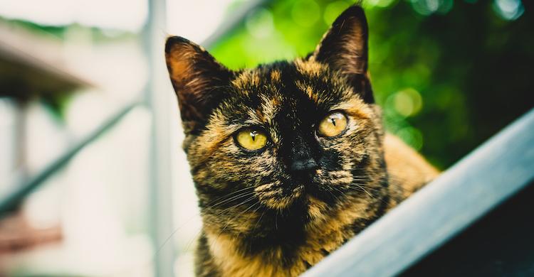 Los gatos son seres muy territoriales (iStock).