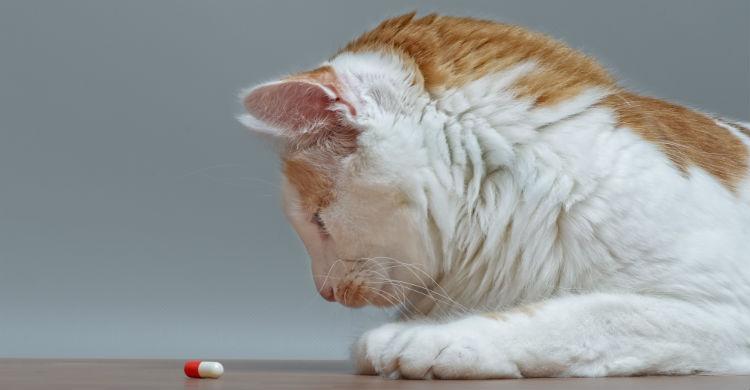 Aprovecha las comidas para que tome los medicamentos (Foto: iStock)