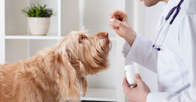 Consulta al especialista y céntrate en el animal (Foto: iStock)