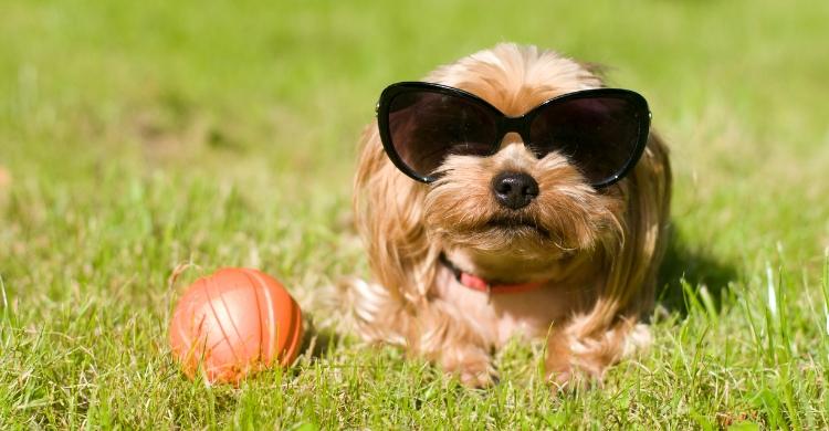 Tener una mascota implica compromiso (Istock)