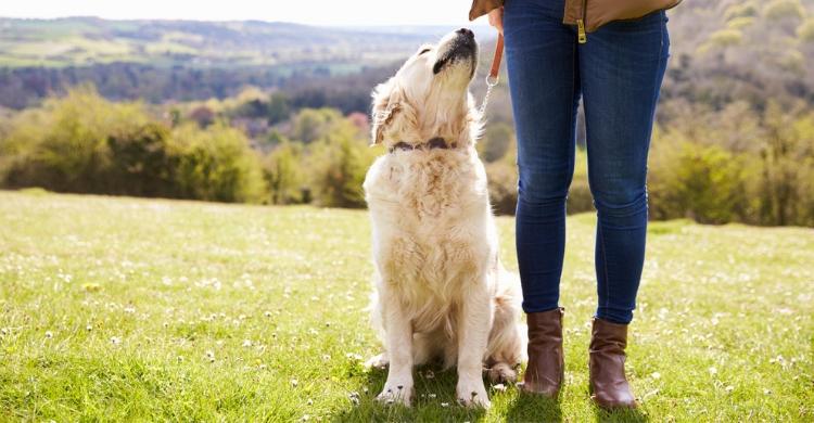 Son muchas las teorías sobre los perros y sus heces (Istock)