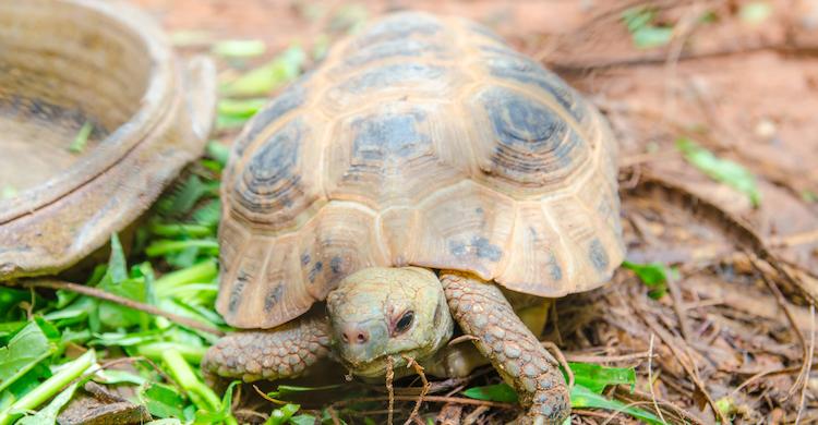 Las tortugas pueden verse dañadas si ingieren determinados alimentos (iStock).