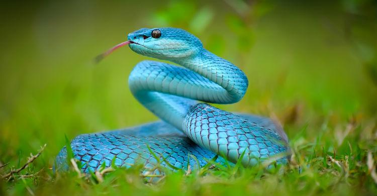 Soñar con serpientes puede significar dudas o miedo (Foto: iStock)