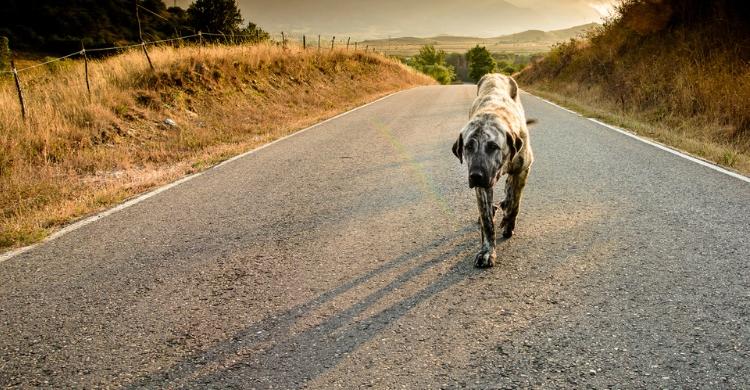 Desde catarros a virus, hay que vigilar la salud de la mascota y controlar las enfermedades que puedan ser contagiosas para las personas (Istock)