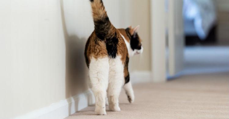 Debes vigilar qué hace tu mascota y ayudarle a corregir malas costumbres (Foto: iStock)