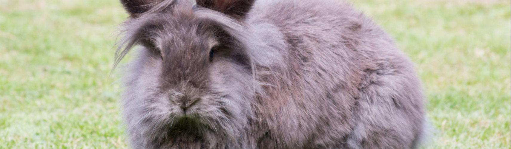 Conejos de tratamiento patas de